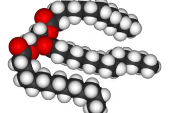 Molecola di lipide